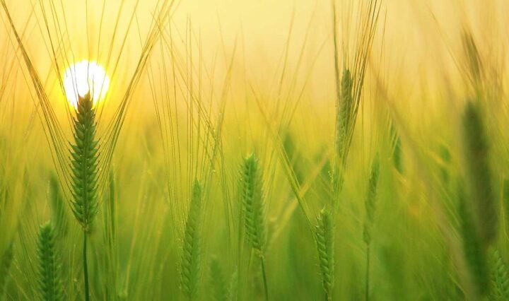 Agriculture, Agro-alimentaire, Elevage